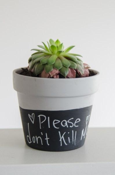 chalkboard paint dipped plant pots - Lemon Thistle via @Remodelaholic