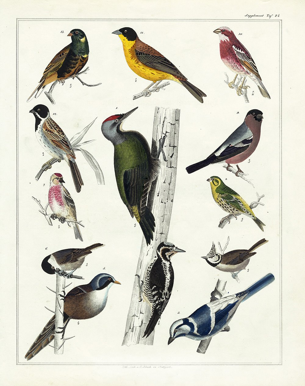 This is an image of Printable Bird in checklist