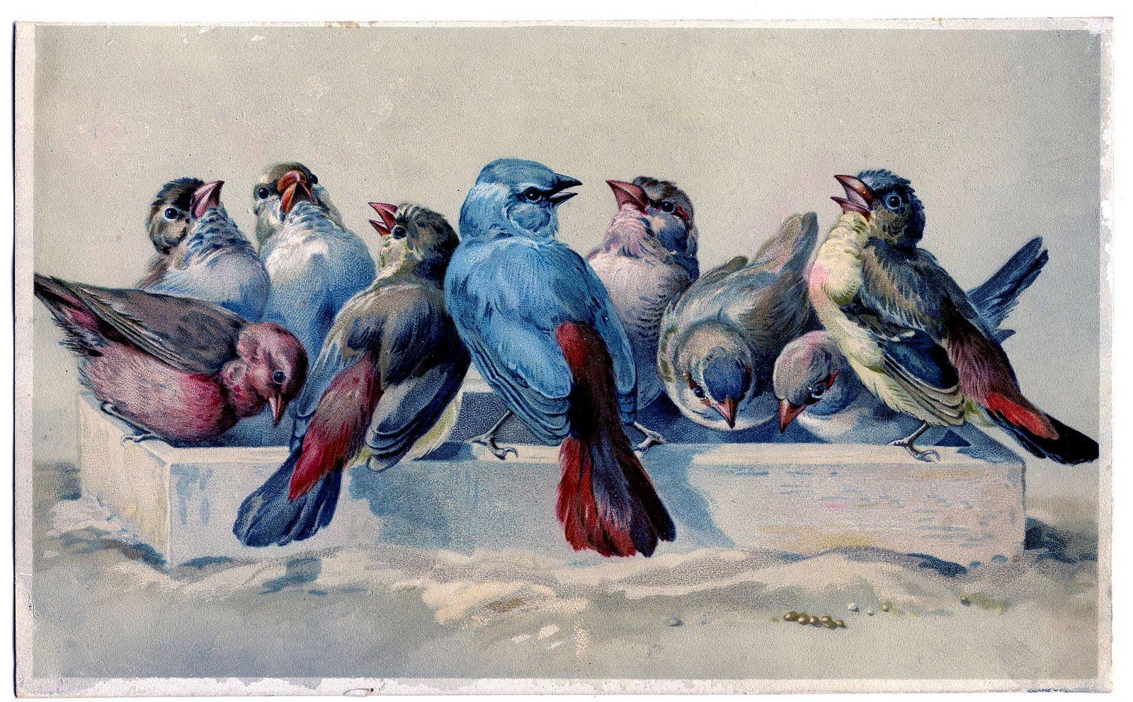 Remodelaholic 25 Free Vintage Bird Printable Images