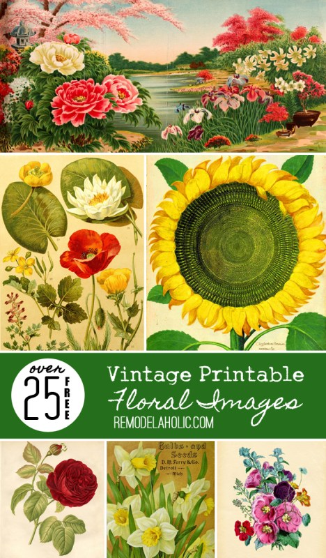 25+ Free Vintage Printable Floral Images -- perfect for a gallery wall or anywhere you need an extra beautiful piece of art!