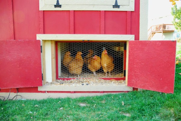 DIY Chicken Coop by Chalkboardblue featured on Remodelaholic