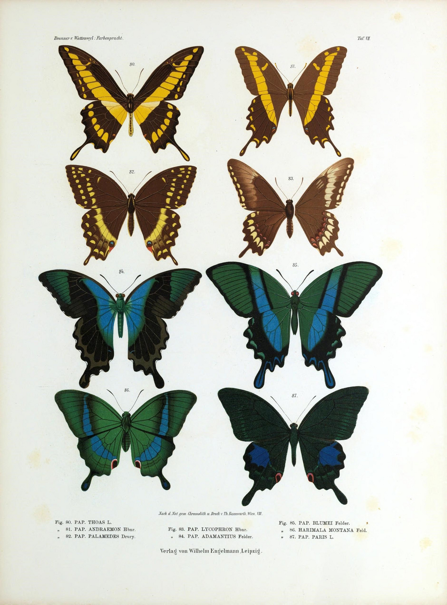 photograph relating to Printable Butterfly identified as Remodelaholic 25+ Absolutely free Butterflies and Moths Common