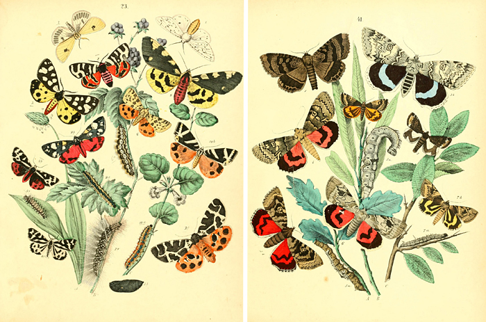 Remodelaholic | 25+ Free Butterflies and Moths Vintage Printable Images