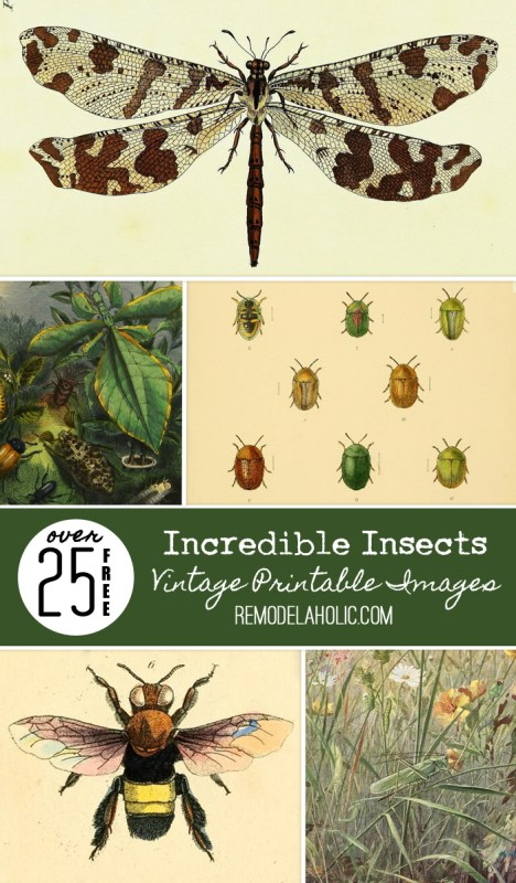 These vintage printable insect images are awesome! Print them out for instant art!