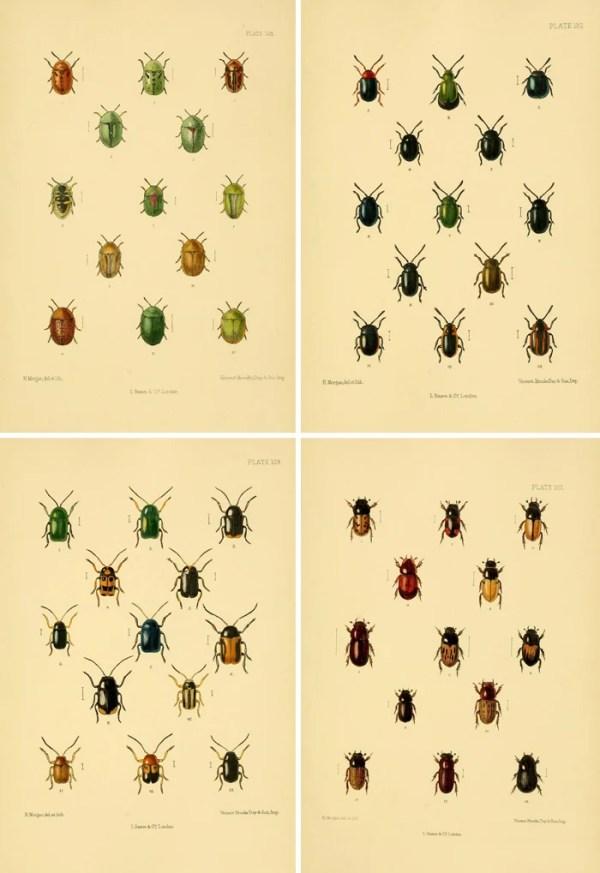 Free printable art - stunning and jewel-like vintage beetle illustrations