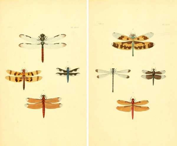 Frame these gorgeous free vintage dragonfly images for instant art!