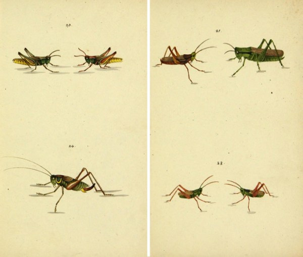 Lovely free vintage insect printables!