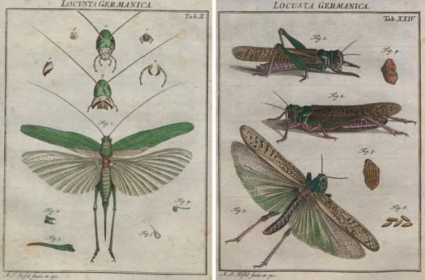 Printable vintage locust images make fascinating wall art