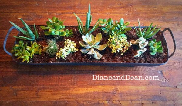 diy succulent centerpiece Diane and Dean