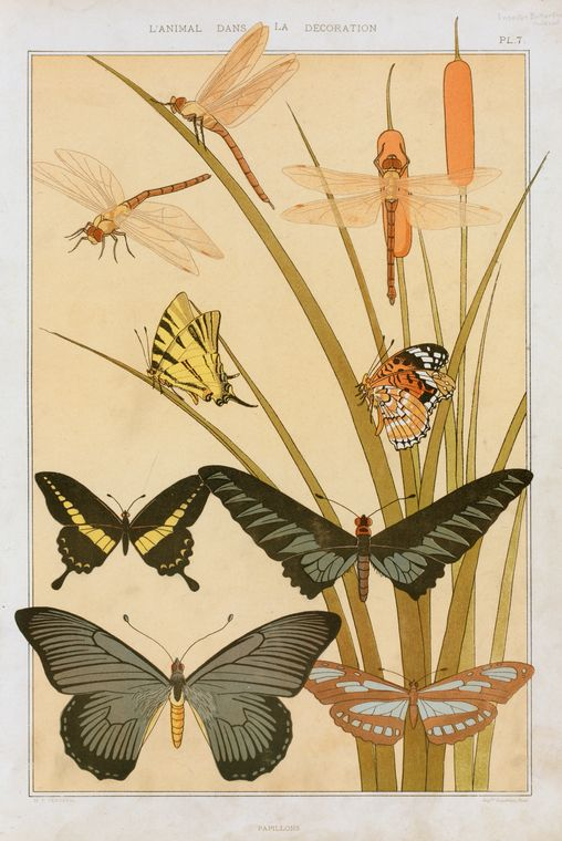 vintage book page print, illustrated butterflies NYPL