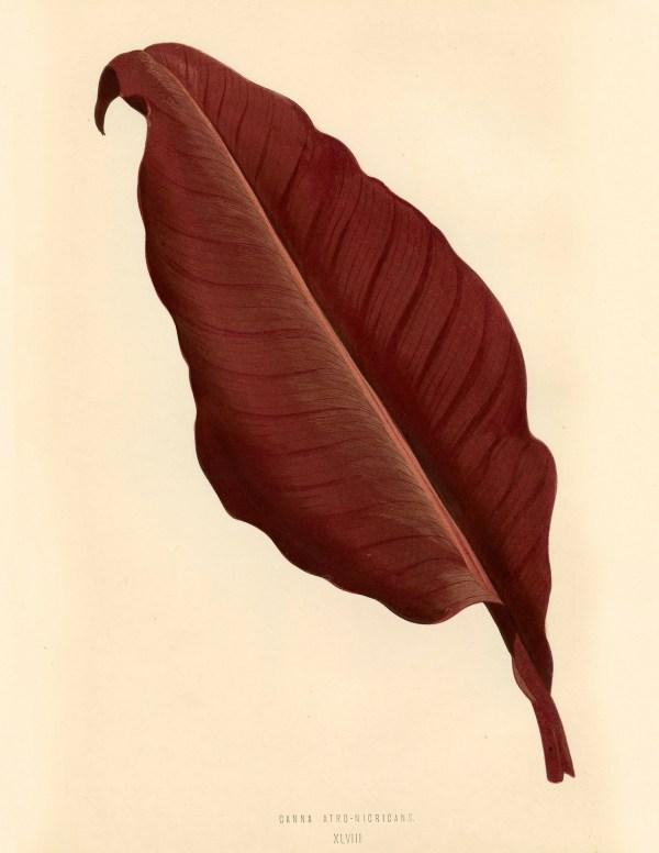 Free Vintage Leaves Image 4