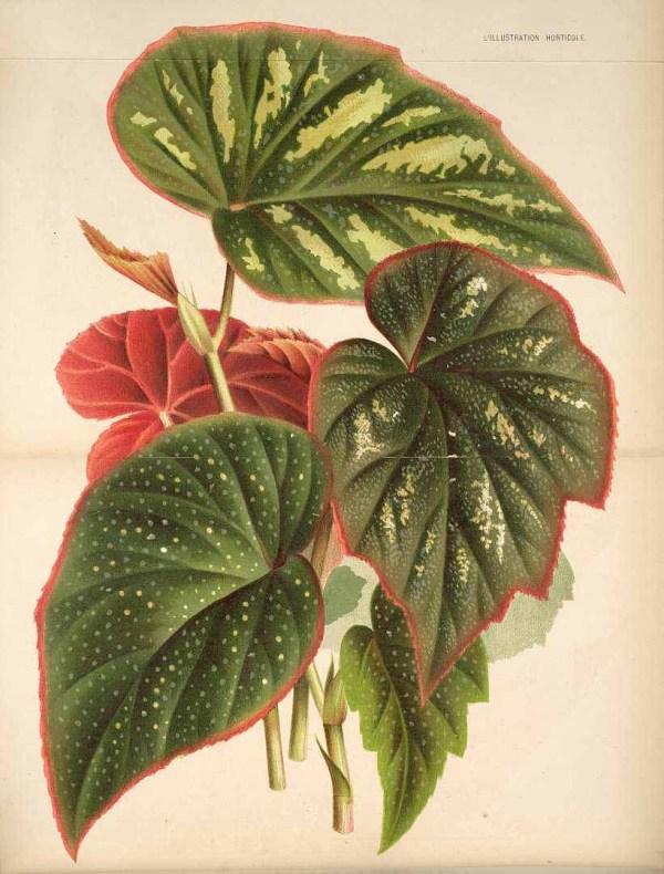 Free Vintage Leaves Image 40