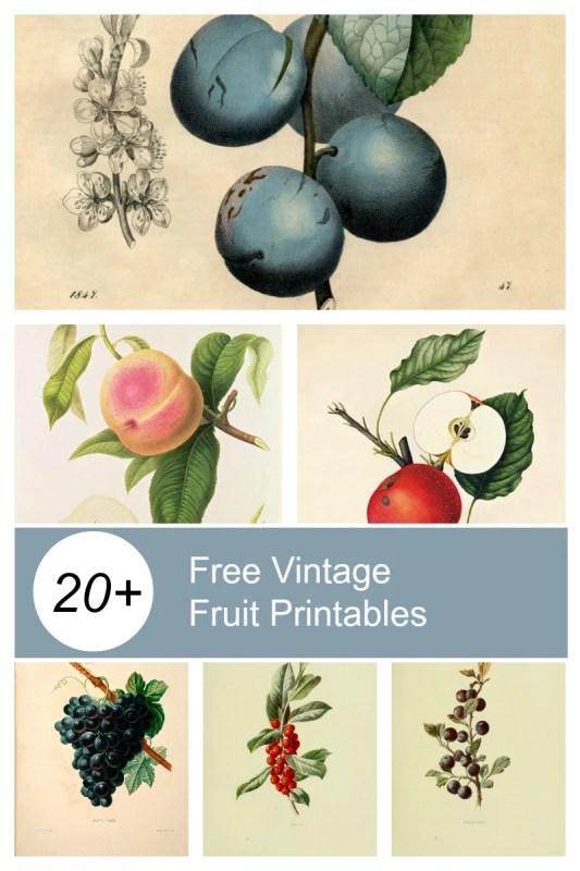 Remodelaholic Vintage Fruit Printables 800 X 1200