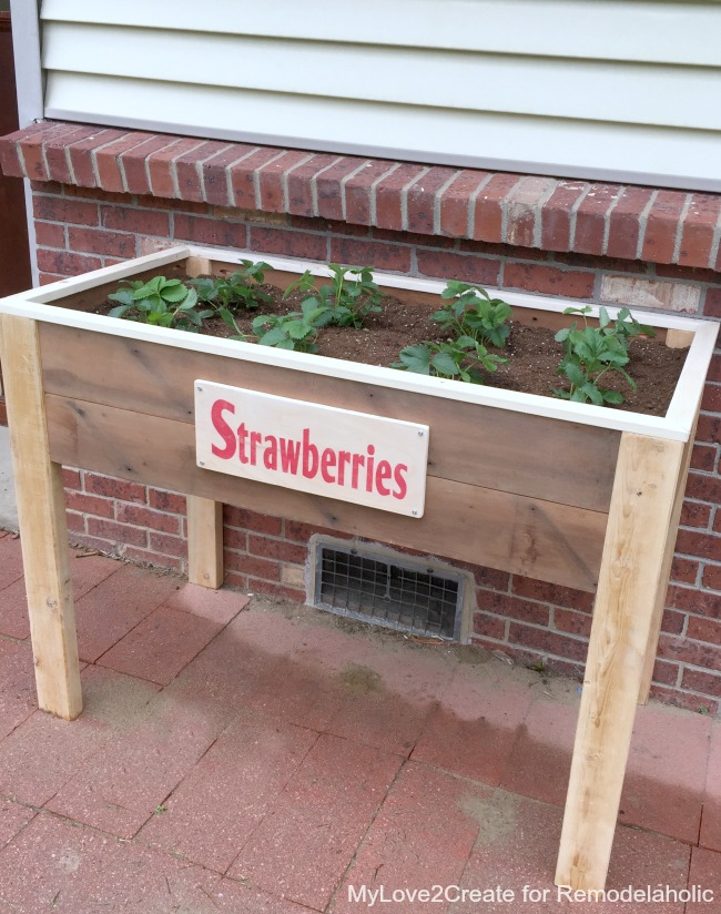planter with strawberry sign, MyLove2Create for Remodelaholic
