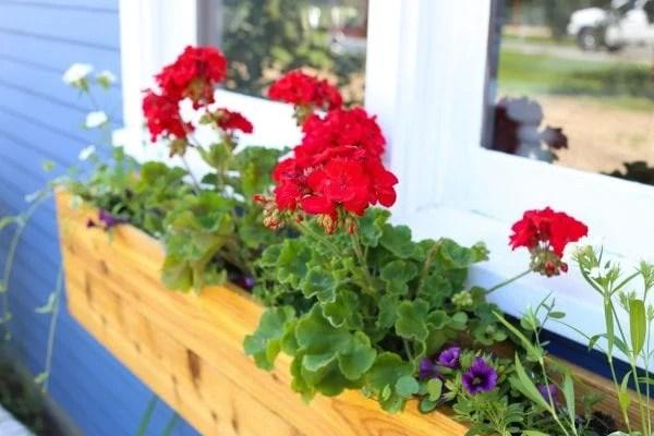 DIY custom cedar wood window box with geraniums
