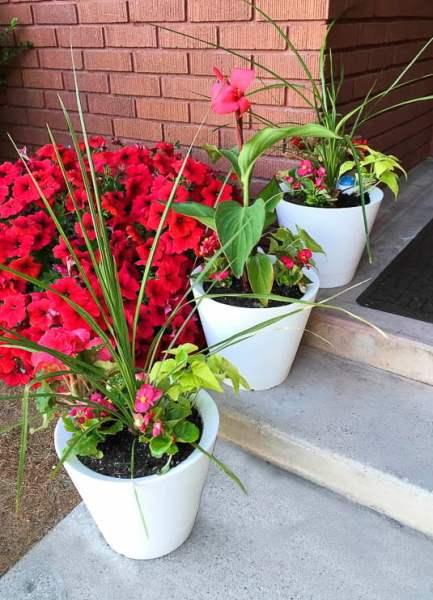 Remodeholic Self Watering Nimbus Pots