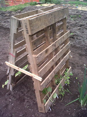 whole-pallet-into-garden-trellis-preppy-pink-crocodile