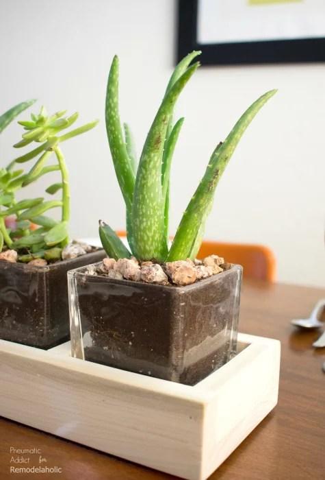 How To Modern Succulent Long Centerpiece 700