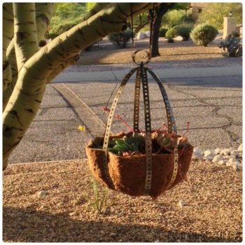 Hanging Orb Planter From Metal Hanger Strap, Dazzle While Frazzled