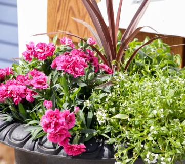 Feature Image How To Create Beautiful Outdoor Pots And Planters | This Mamas Dance For Remodelaholic 1