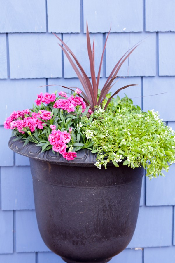 How To Create Beautiful Outdoor Pots And Planters | This Mamas Dance For Remodelaholic 10