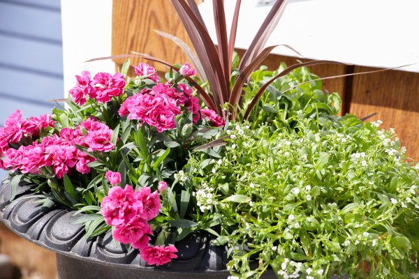 Remodelaholic How To Create Beautiful Outdoor Pots And Planters