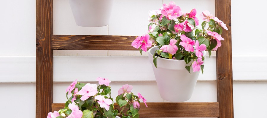 How to Build an Easy DIY Wall Planter Ladder