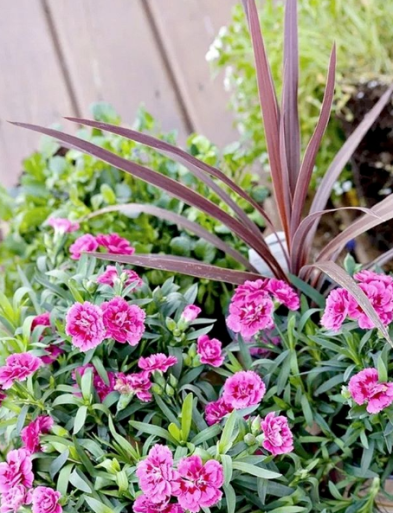 Creating Beautiful Planters For Garden
