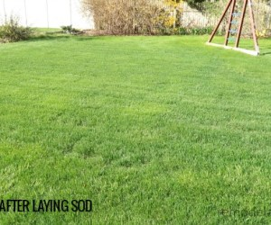 6 Months After Sod Installation #remodelaholic Tips To Lay Your Own Sod