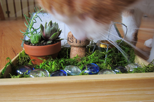 Cat eating fairy garden