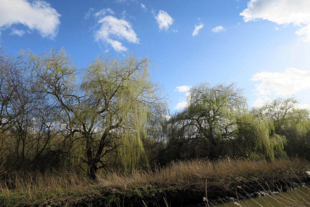 Early spring willows in Beam Parklands