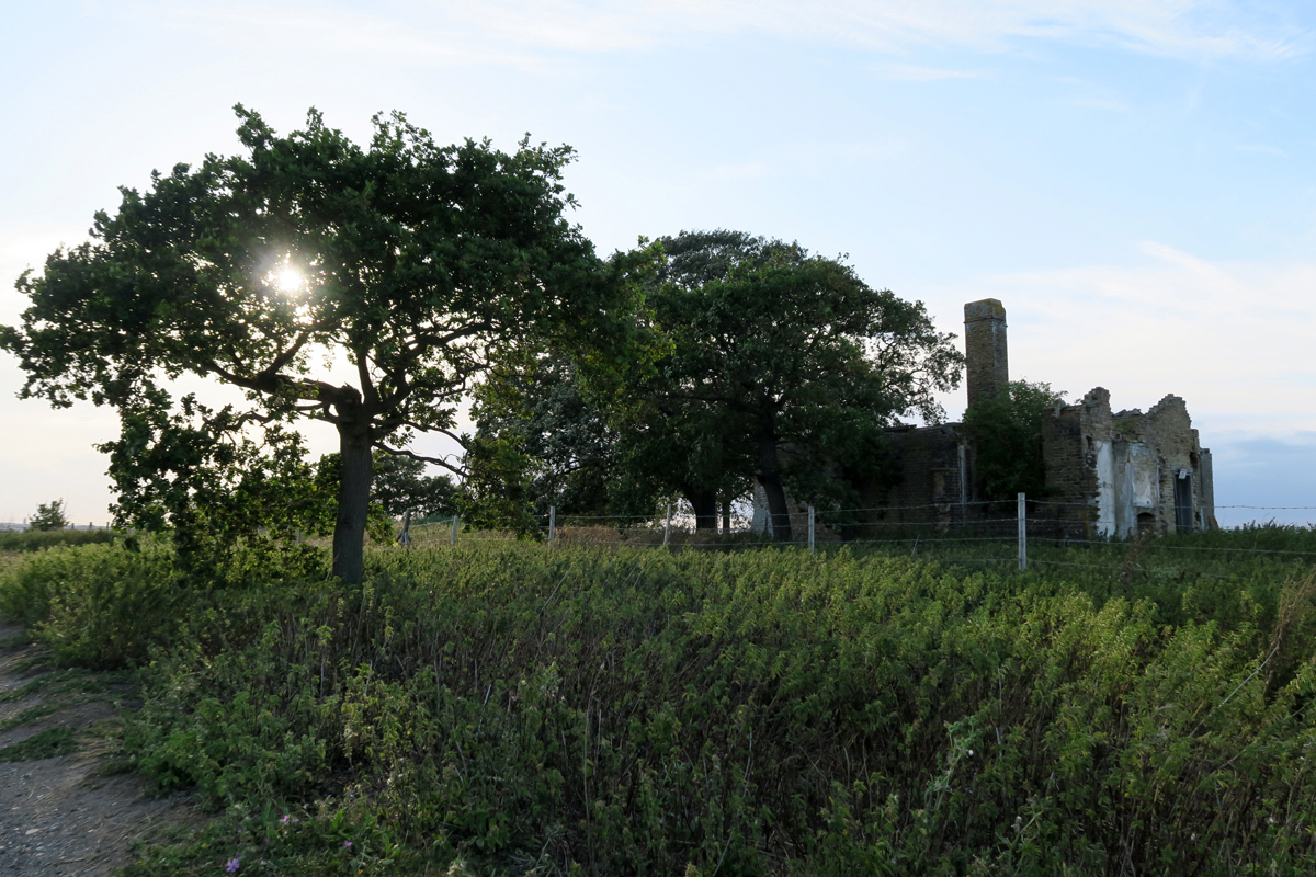 Trees grow where Elmley Church once stood