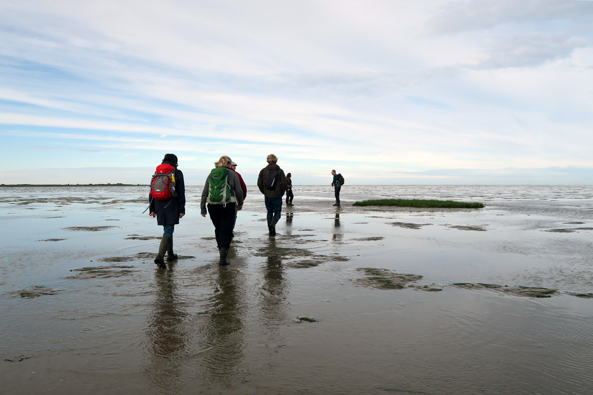 A group of four walks out across mudflats towards a guide