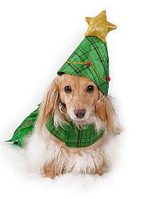 Dachsund in a Christmas tree outfit