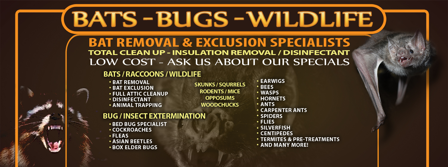 Bohmz Pest Control | Raccoon Control / Bat Removal in Wisconsin / Wildlife Trapping / Bed Bugs