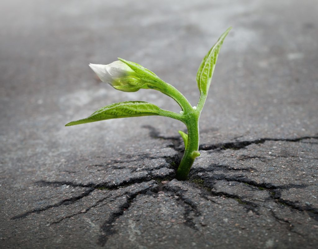 Faith grows