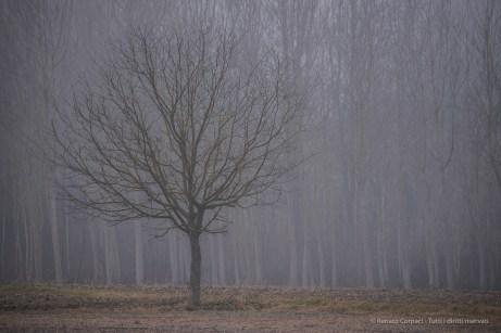 Countryside surrounding Caravino. Nikon D750, 320 mm (80-400.0 mm ƒ/4.5-5.6) 1/320 ƒ/5.6 ISO 100