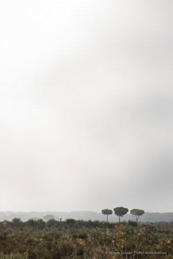 """El Rocío, Los Cabezudos, Parco di Doñana. Nikon D810, 105 mm (105.0 mm ƒ/2.8) 1/250"""" ƒ/8 ISO 64"""