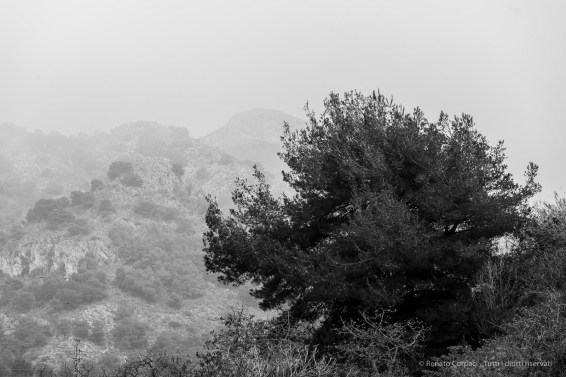 «Until /Great Birnam Wood to high Dunsinane Hill /Shall come…». Near Maro, Andalucia, Nikon D810, 240mm (80-400.0mm ƒ/4.5-5.6) 1/200 ƒ9 ISO64