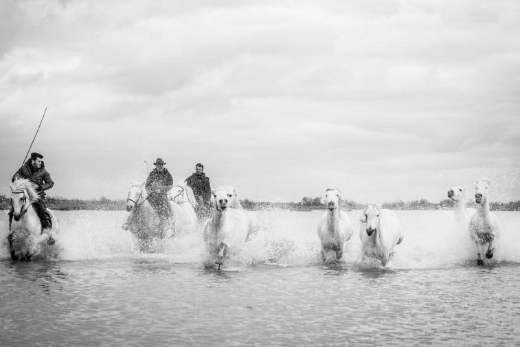 Pointe de Cacharel. Camargue, 2018. Nikon D750, 80 mm (80-400 mm ƒ/4.5-5.6) 1/1600 ƒ/5.6 ISO 2000