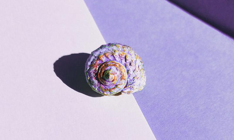 immagine di una conchiglia