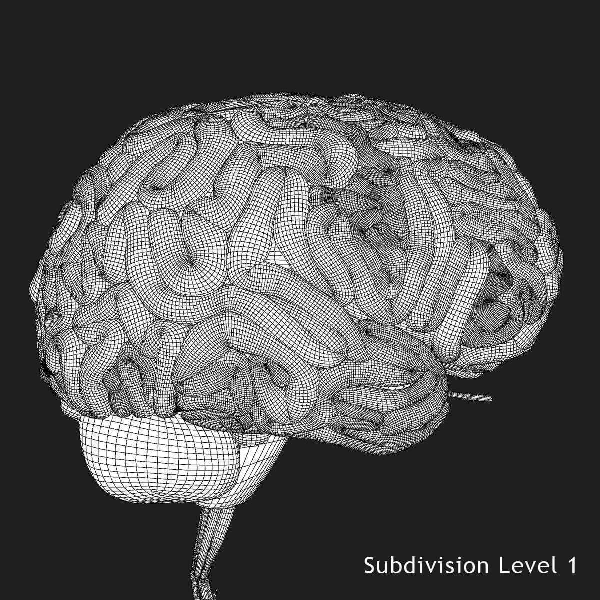 Brain X Ray 3d Model