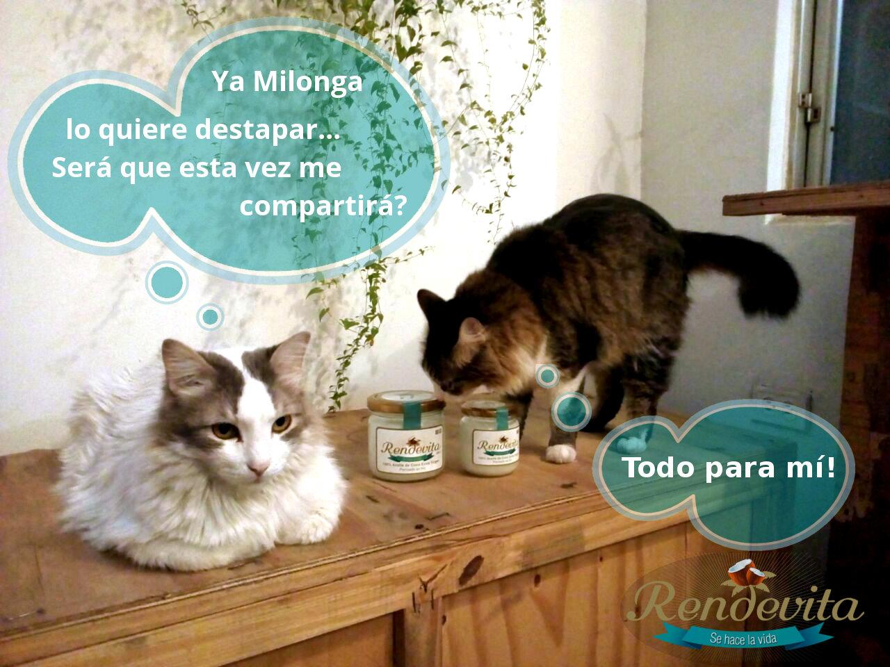 Las aventuras de Gaspar & Milonga: Feliz día del gato!