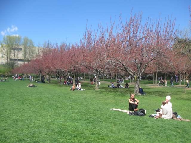 Cherry Esplanade at the Brooklyn Botanic Garden