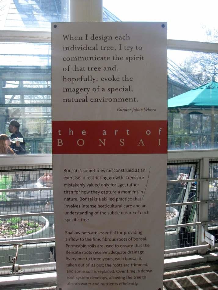 The Art of the Bonsai