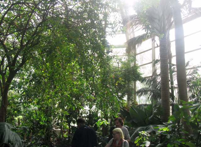 Rainforest pavilion at the Brooklyn Botanic Garden