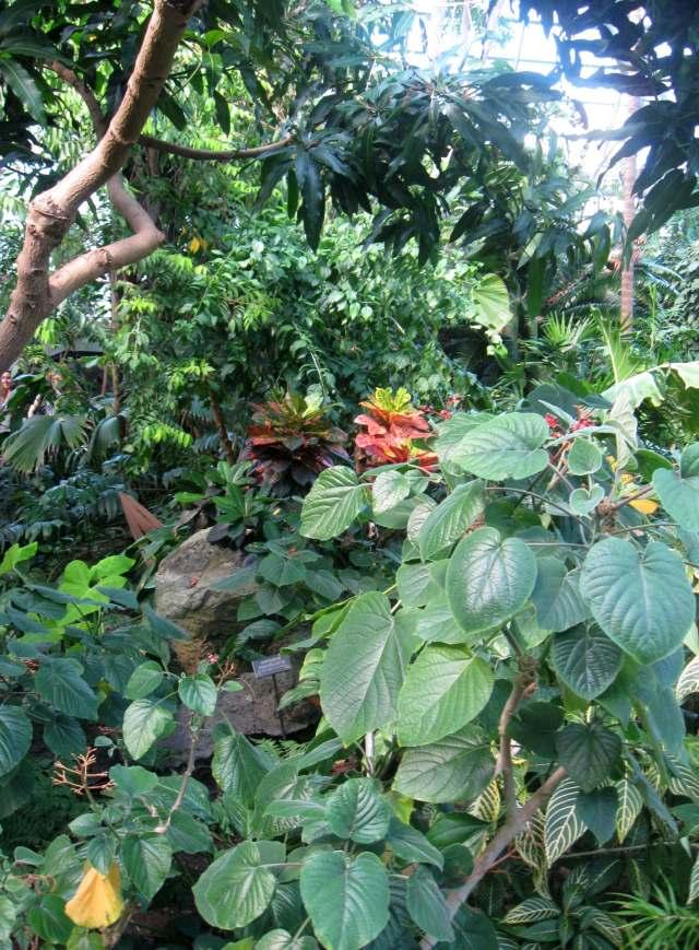 Rainforest pavilion at the Brooklyn Botanic Garden