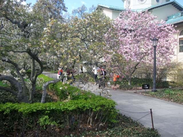 Magnolia Plaza at the Brooklyn Botanic Garden
