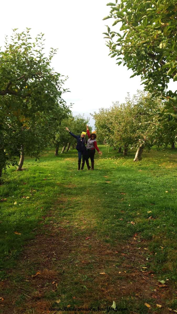 Apple Picking At Fishkill Farms