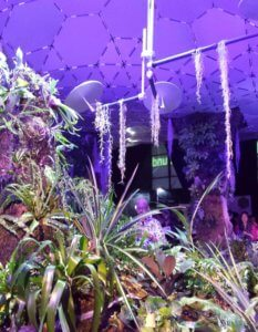 The Lowline Lab in NYC